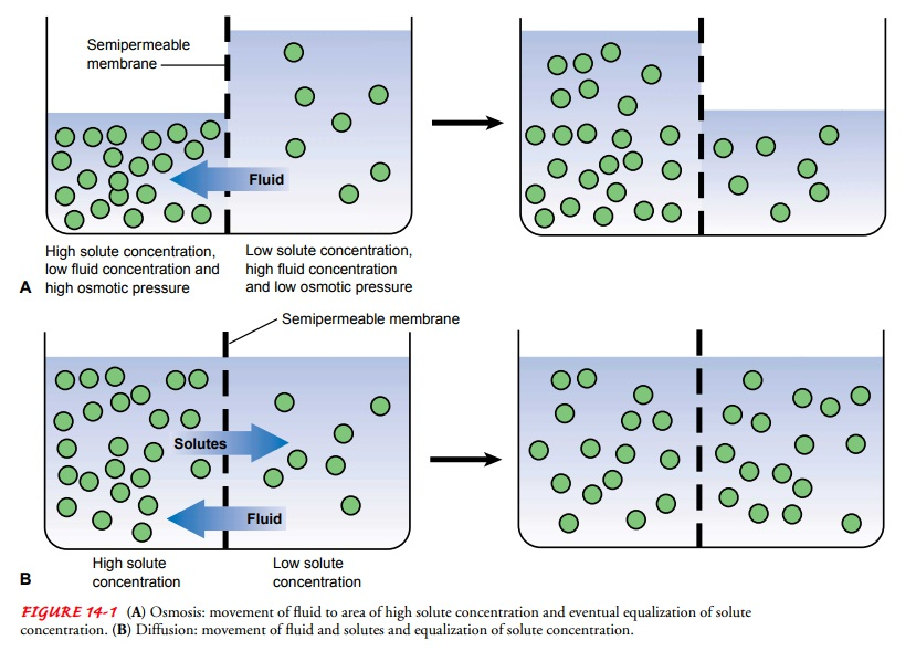 Regulation of Body Fluid Compartments