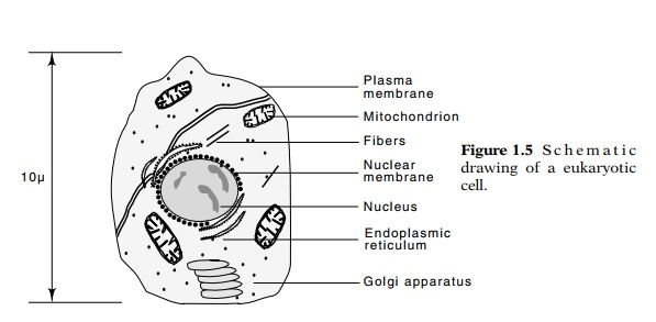 Rudiments of Eukaryotic Cell Structure