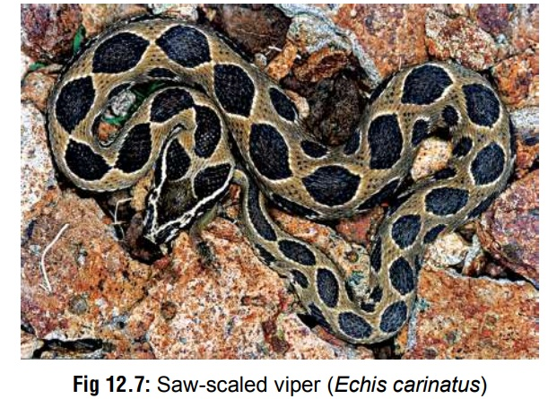 Saw-scaled Viper - Poisons (Toxins)