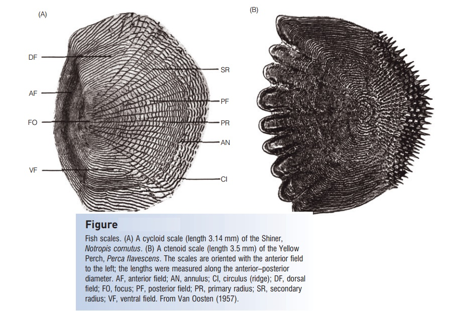 Scale morphology in taxonomy and life history - Integumentary skeleton of Fishes