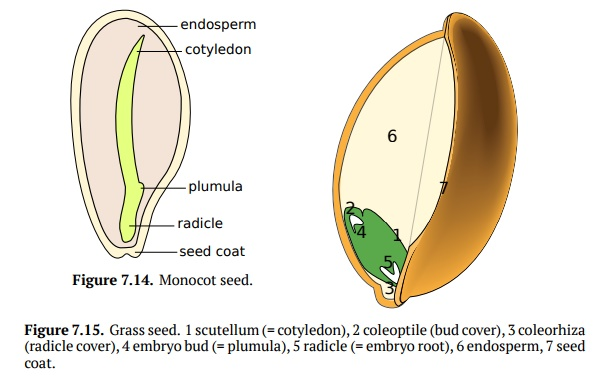 Seeds Structure and Germination