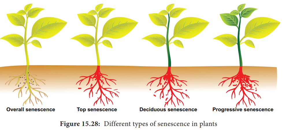 Senescence - Types, Physiology, Factors affecting