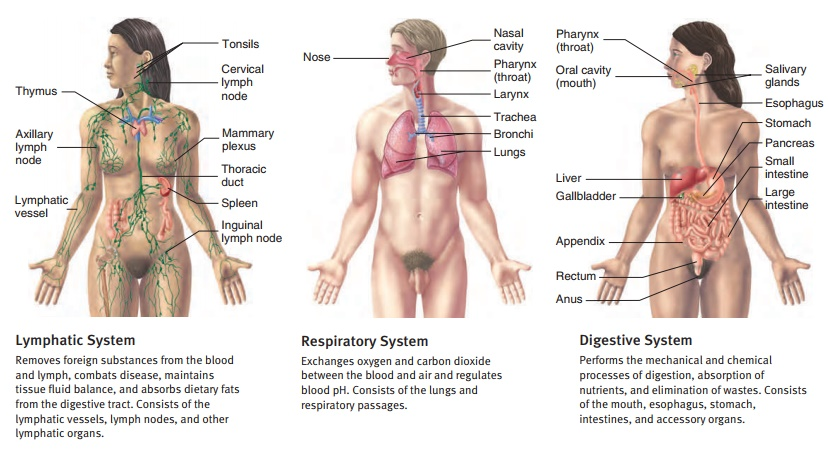 Structural and Functional Organization of the Human Body