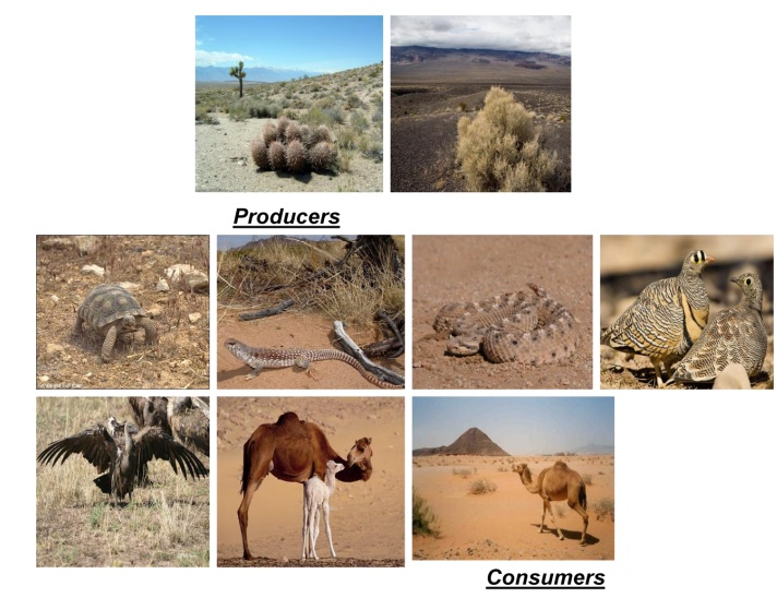 Structure and Functions of Desert Ecosystms