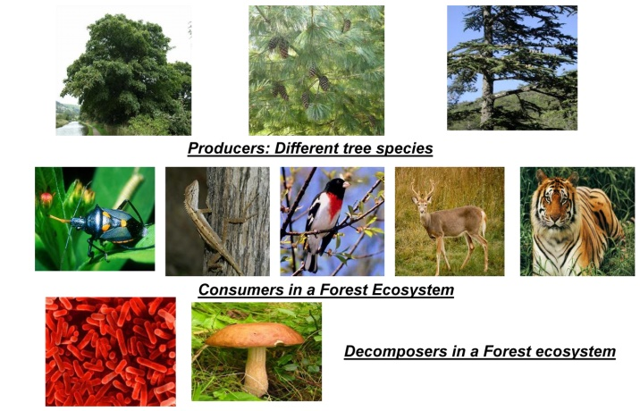 Structure and Function of Forest Ecosystem(Terrestrial Ecosystem)
