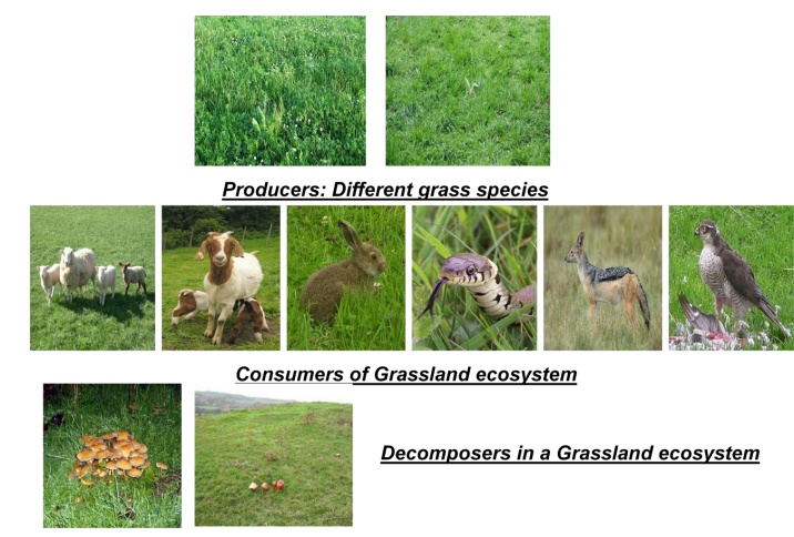 Structure and functions of Grassland Ecosystems