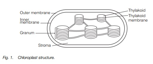 Structure of Plant cell Plastids and mitochondria