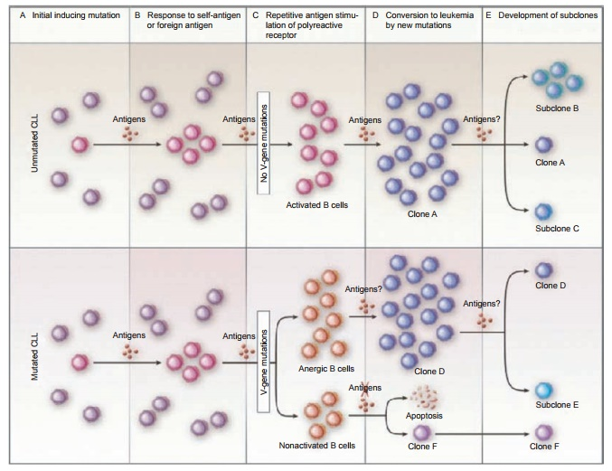 Summary Remarks on the Development, Growth, and Evolution of B-CLL
