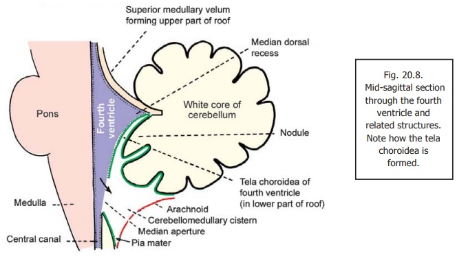 The fourth ventricle ventricles of the brain ccuart Choice Image