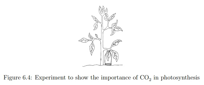 The Importance of Carbon Dioxide in Photosynthesis