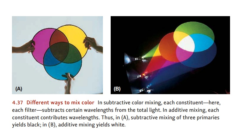 The Neural Basis of Color Vision