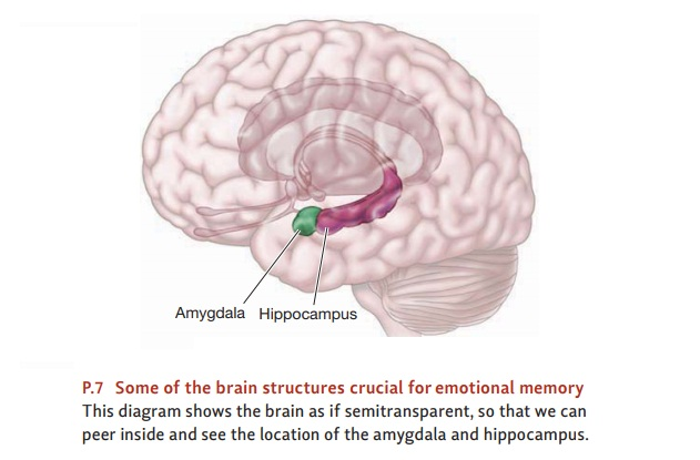 The Neural Basis of Emotional Memory