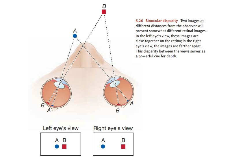 The Neuroscience of Vision