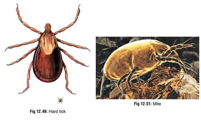 Ticks and Mites - Venomous Creature