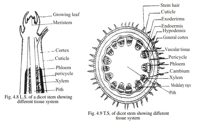 Tissue System and types of Tissue System