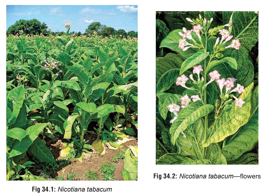 Tobacco - Substances of Dependence and Abuse