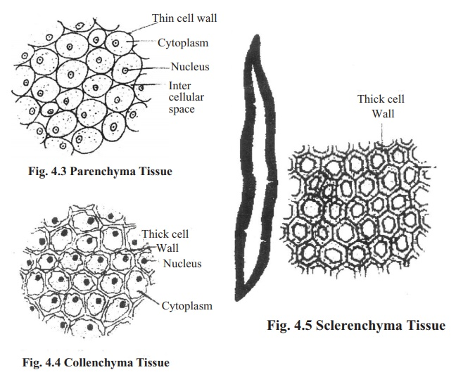Types of Simple permanent tissue and its Functions