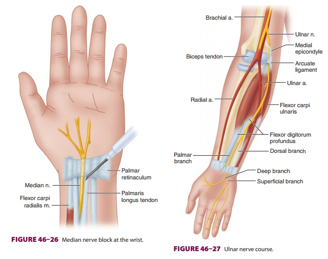 Upper Extremity Peripheral Nerve Blocks: Blocks of the Terminal Nerves