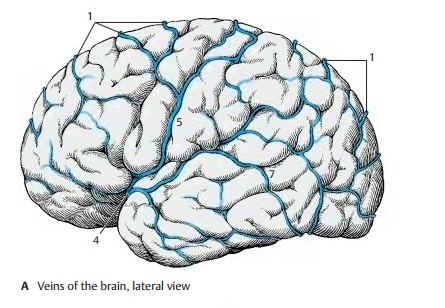 Veins - Cerebrovascular and Ventricular Systems