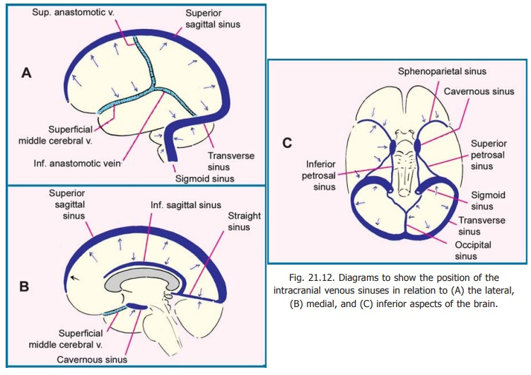 Venous Drainage of the Brain - Blood Supply of Central Nervous System