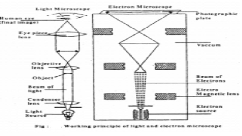 Light Microscope and Electron Microscope (TEM - Transmission Electron Microscopy & SEM - Scanning Electron Microscope )