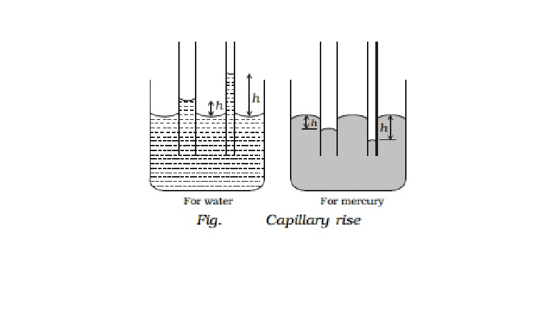 Capillarity and Illustrations of capillarity