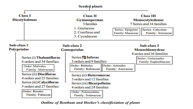 Bentham and Hooker's classification of plants : Dicotyledonae, Gymnospermae and Monocotyledonae
