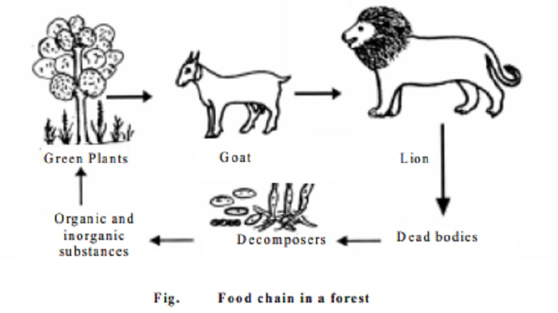 terrestrial food chain definition