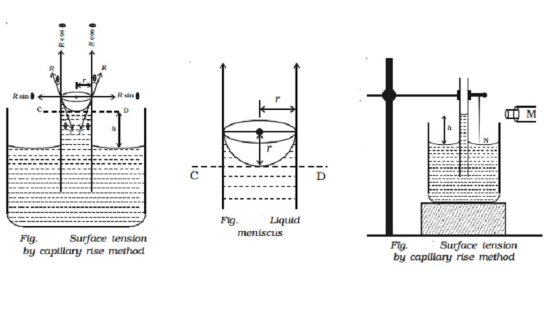 Experimental determination of surface tension of water by capillary rise method