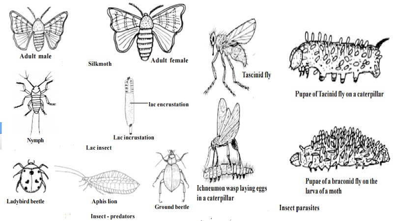 Uses and types of Beneficial Insects : Productive Insects - Honey bee, Silk worms, Lac insects. Helpful Insects : Insect - Predators