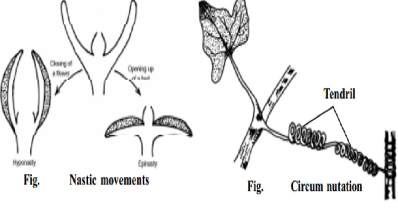 Plant Movements : Movements of locomotion and curvature
