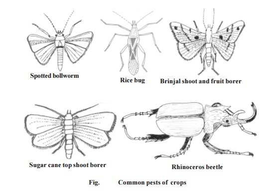 Pests - Pests of Crops : Cotton, Paddy, Sugarcane, Vegetables, Coconut palm, Stored grains, household goods