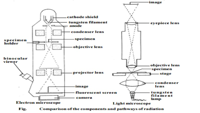 Compound light, Dark field, Phase contrast, Oil - immersion and Electron microscope