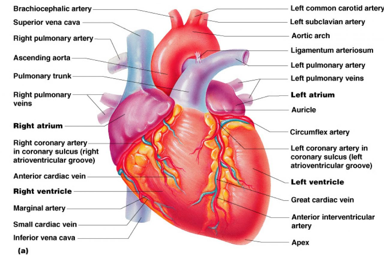 Reducing your risk of stroke and heart attack study material reducing your risk of stroke and heart attack ccuart Images