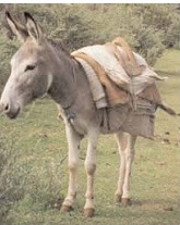 A MERCHANT AND HIS DONKEY