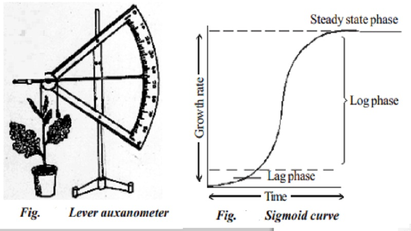 Plant growth and Measurement of plant growth