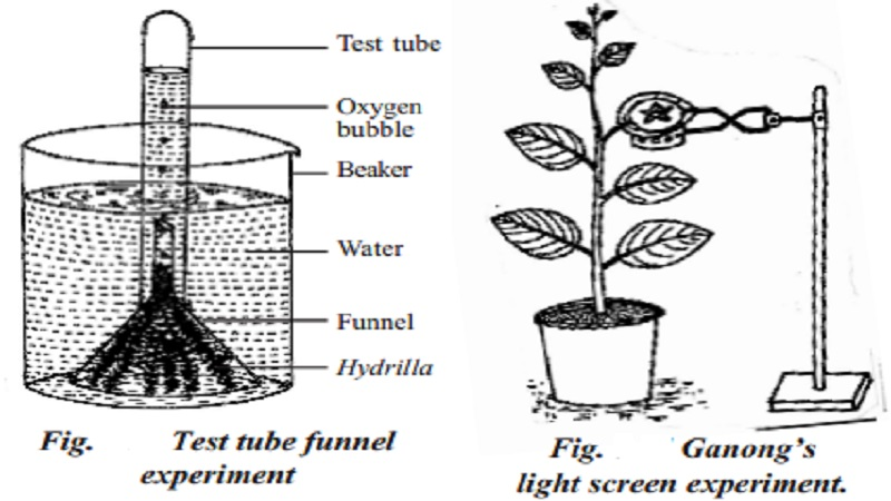 EXPERIMENTS ON PHOTOSYNTHESIS : 1.Ganong's light screen 2.Test tube and funnel experiment