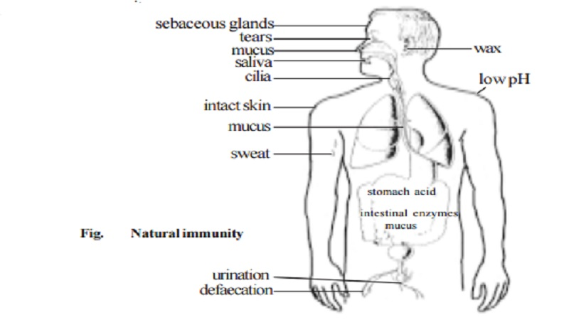 IMMUNOLOGY : Innate Immunity (Non-specific) And Acquired Immunity (Specific immunity)