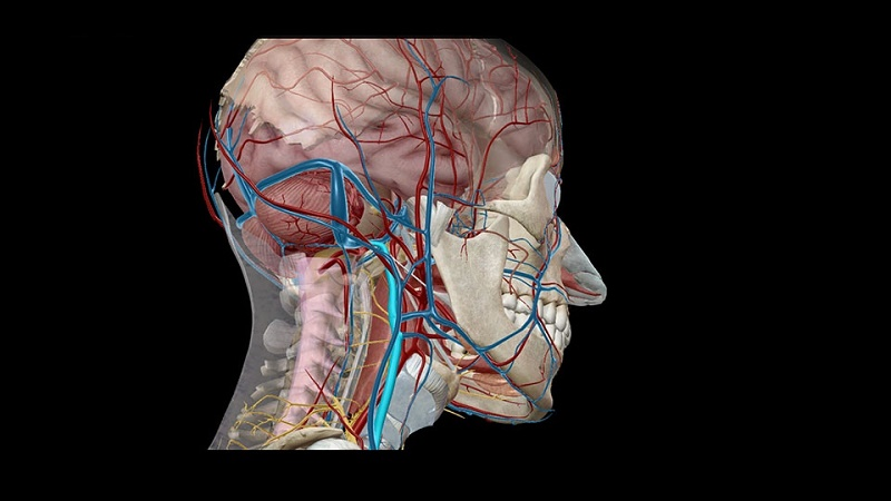 Human Nervous System and Sensory Organs