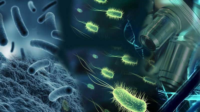 Microbiology - Lecture Notes, Study Material, Important Questions