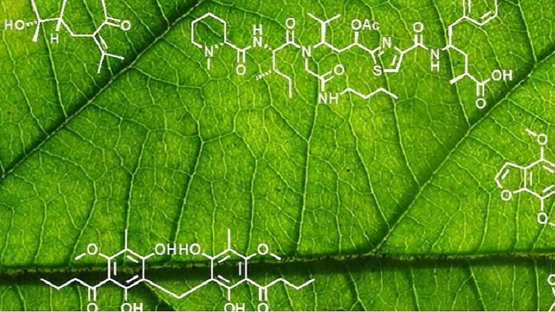 Plant Biochemistry