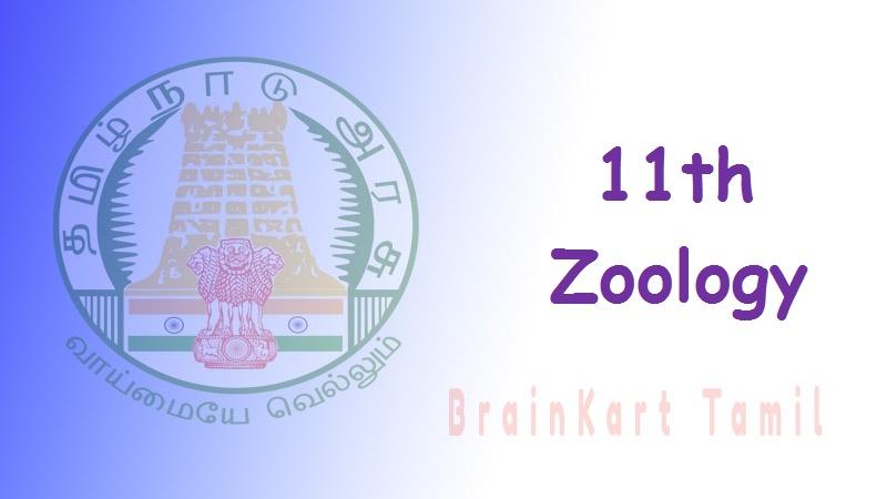 Zoology 11th std